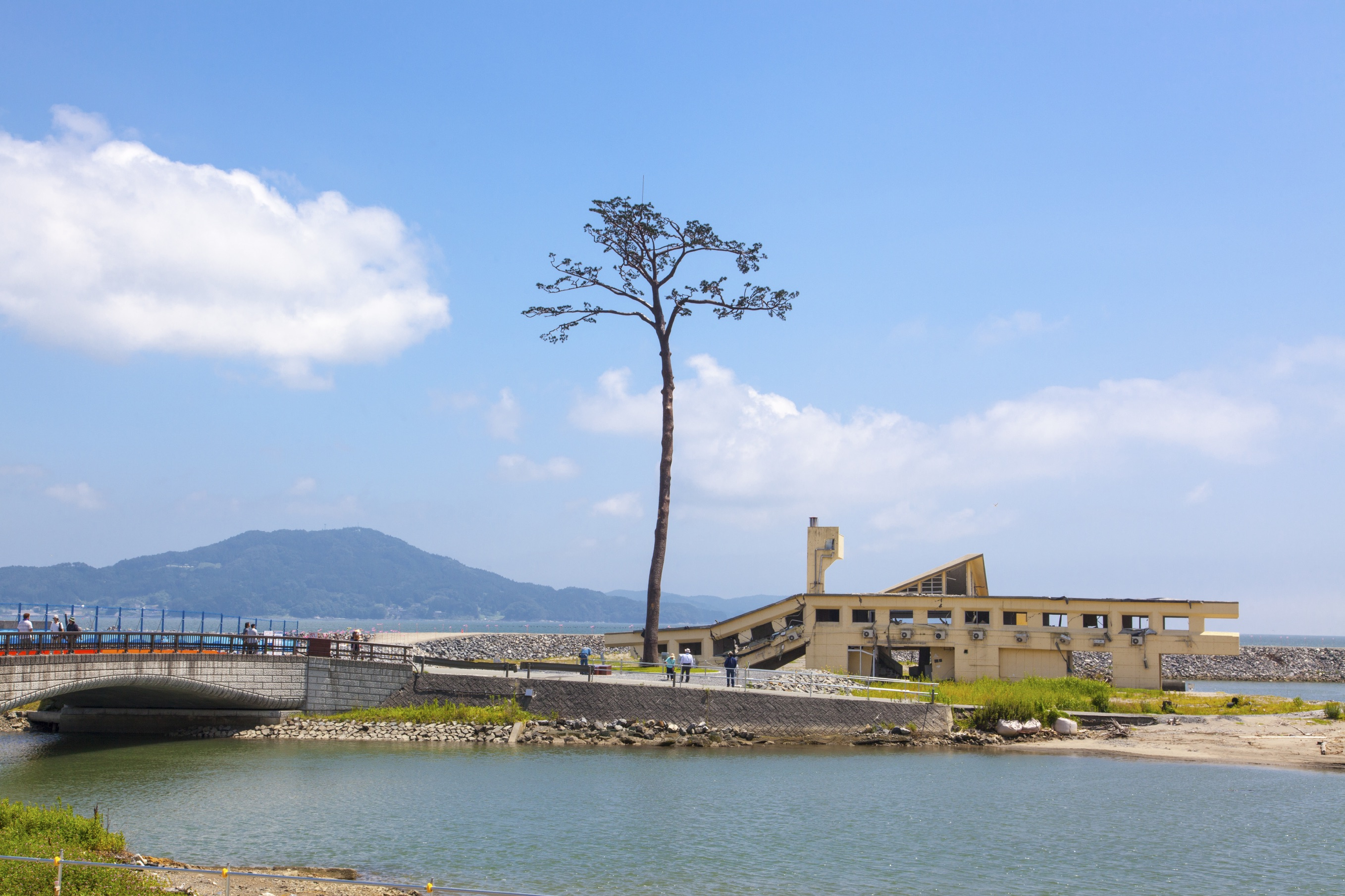 The miracle pine tree in Iwate remains a symbol of hope for those affected by the 2011 tsunami.