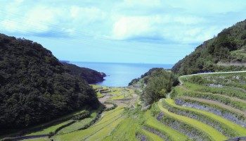 Rice fields looking out to sea in Saga Prefecture, Japan