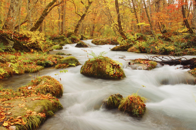 Autumn Colors of Oirase River, located in Aomori Prefecture Japan