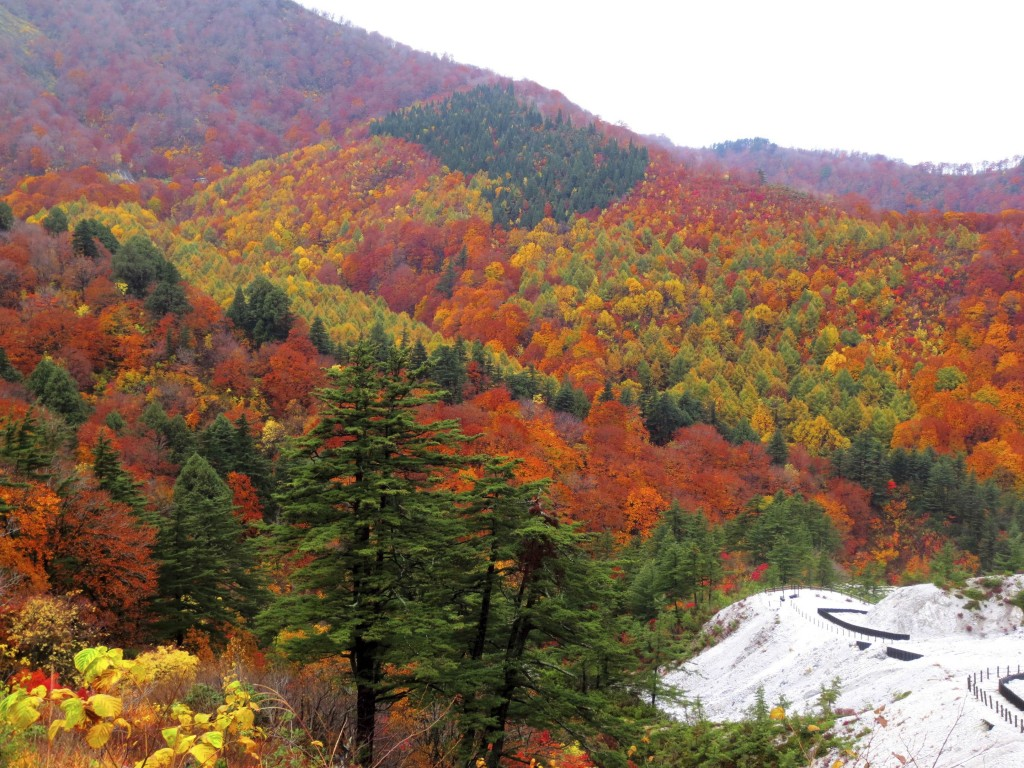 Autumn leaves on the approach to Yuzawa city, Akita.