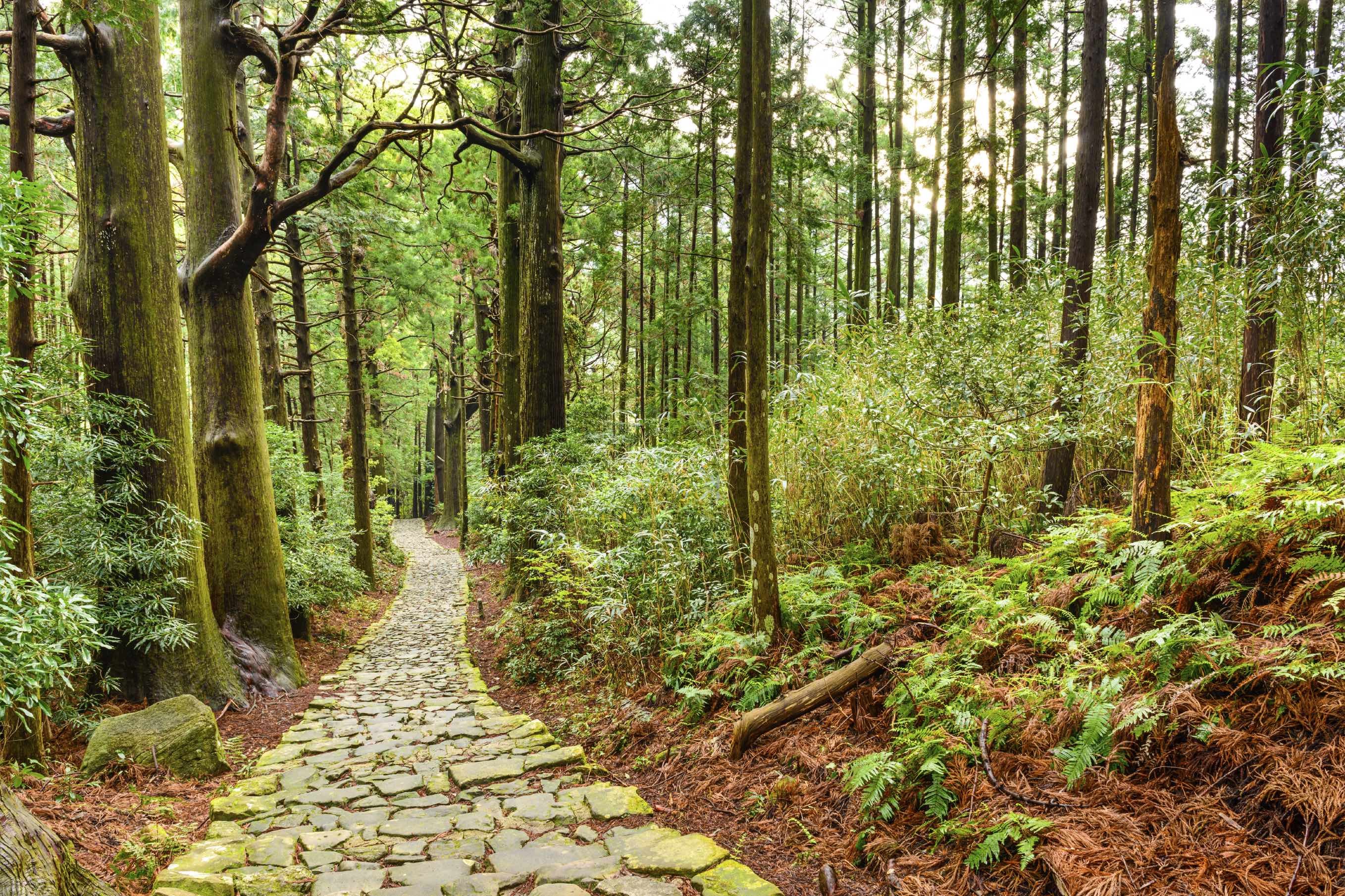 Follow the sacred Kumano Kodo in Wakayama prefecture