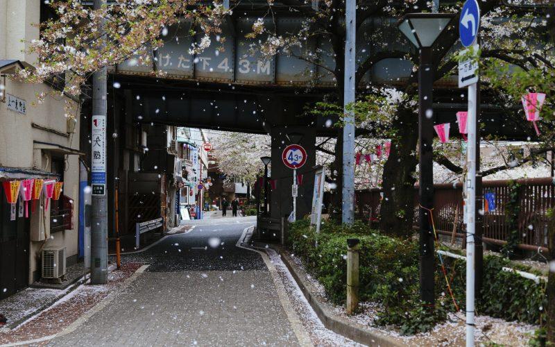 Streets of Meguro ward