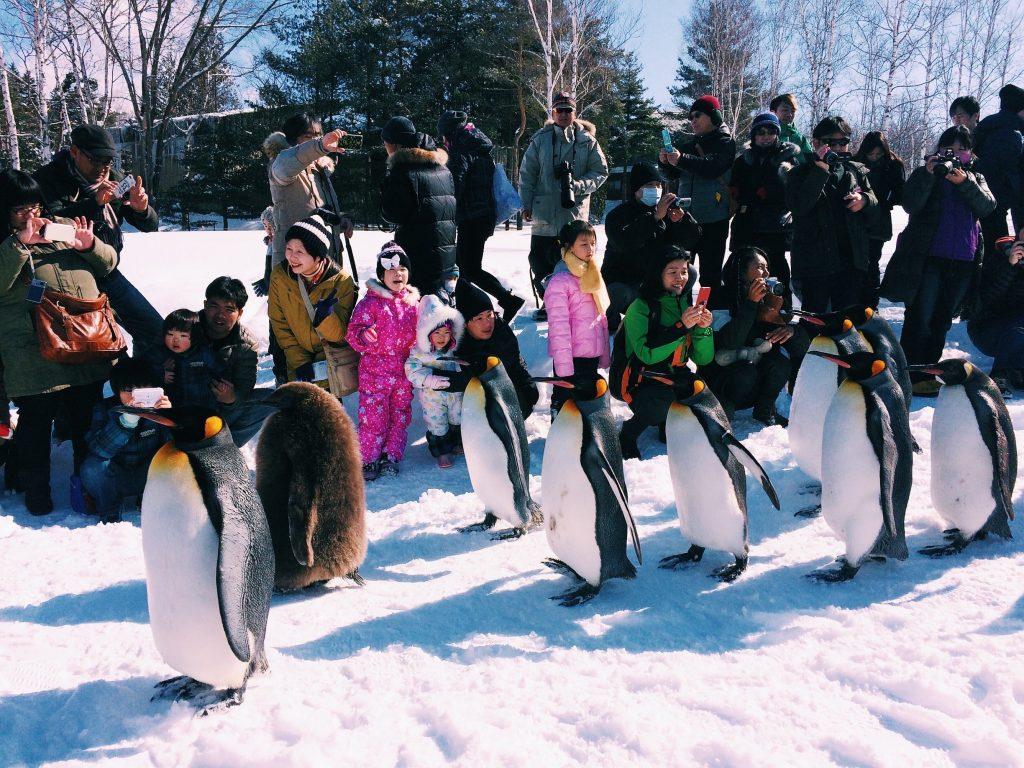 Asahiyama Zoo Penguins