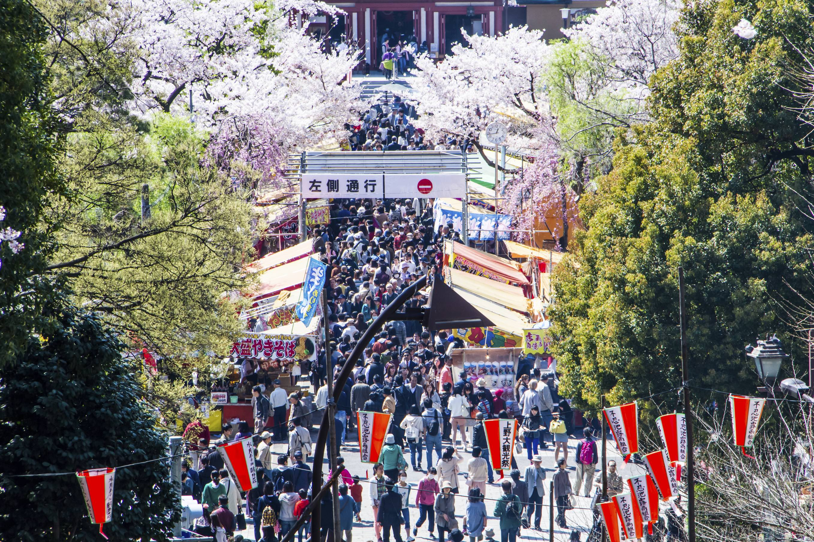 Ueno Park is one of the most popular places in the city for hanami, or cherry blossom viewing,