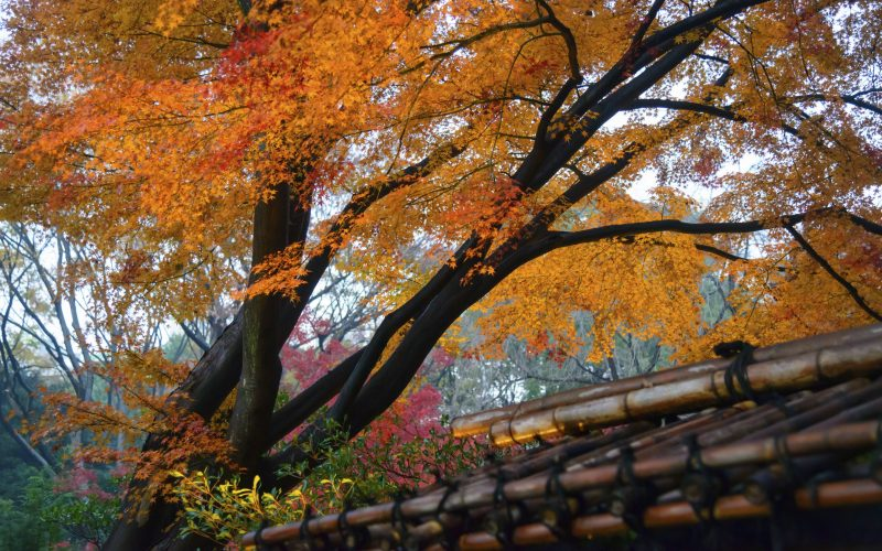 Autumn leaves in a garden Japan