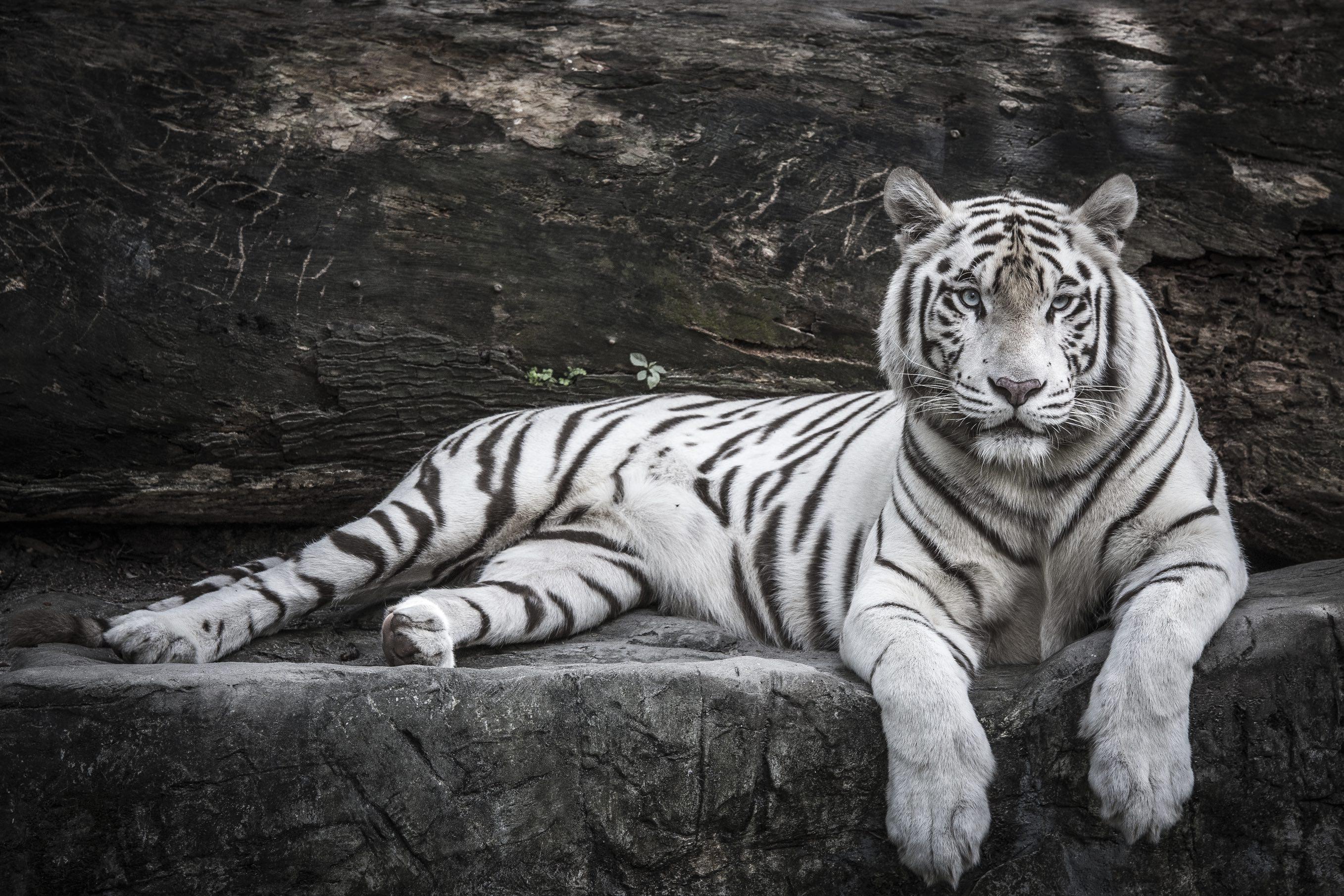 Tobu Zoo - GaijinPot Travel