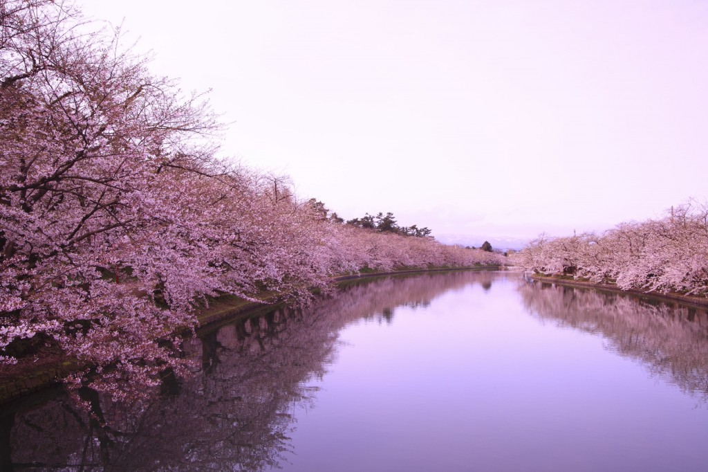100 Places To See Cherry Blossom In Japan Tohoku