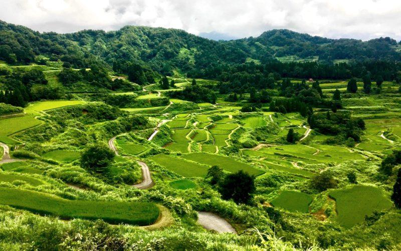 Niigata Rice Terrace